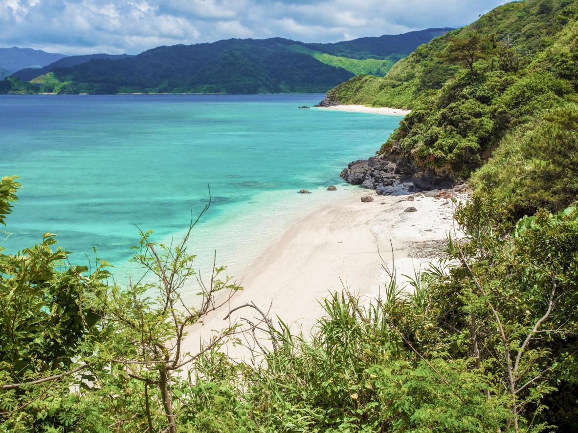 Memandu melalui landskap seperti hutan yang dipenuhi paku-pakis gergasi untuk ke Amami Oshima