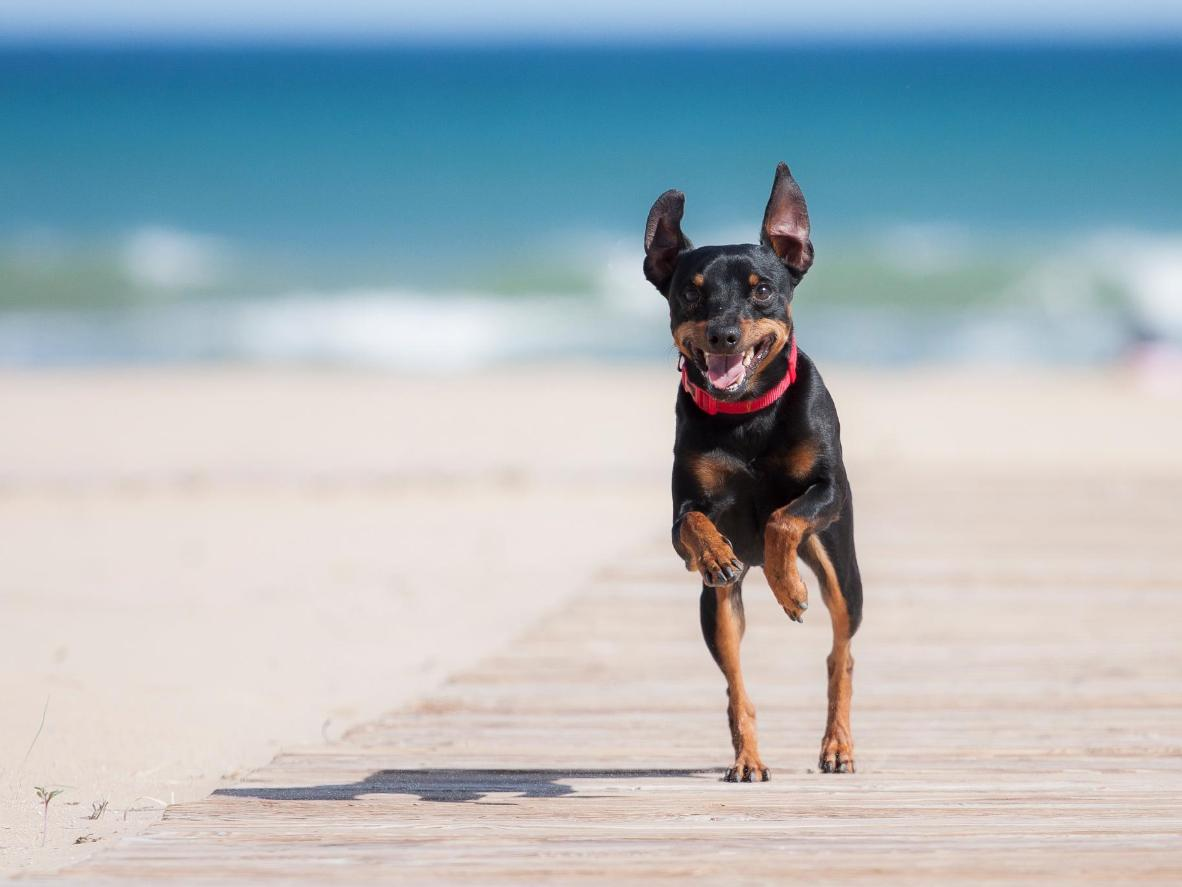Let your dog off its leash all year round at this 100% dog-friendly beach
