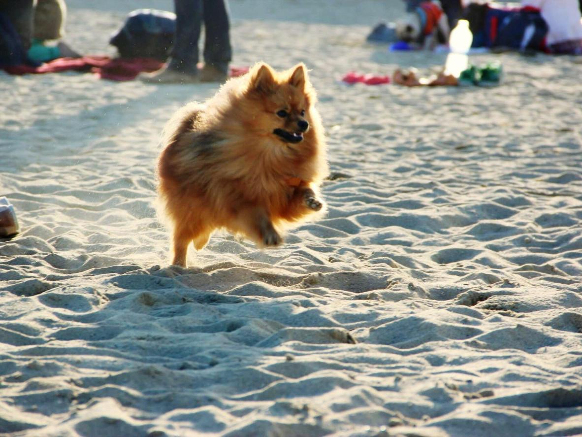 Relax on the sand while letting Fido roam free on Pineda de Mar