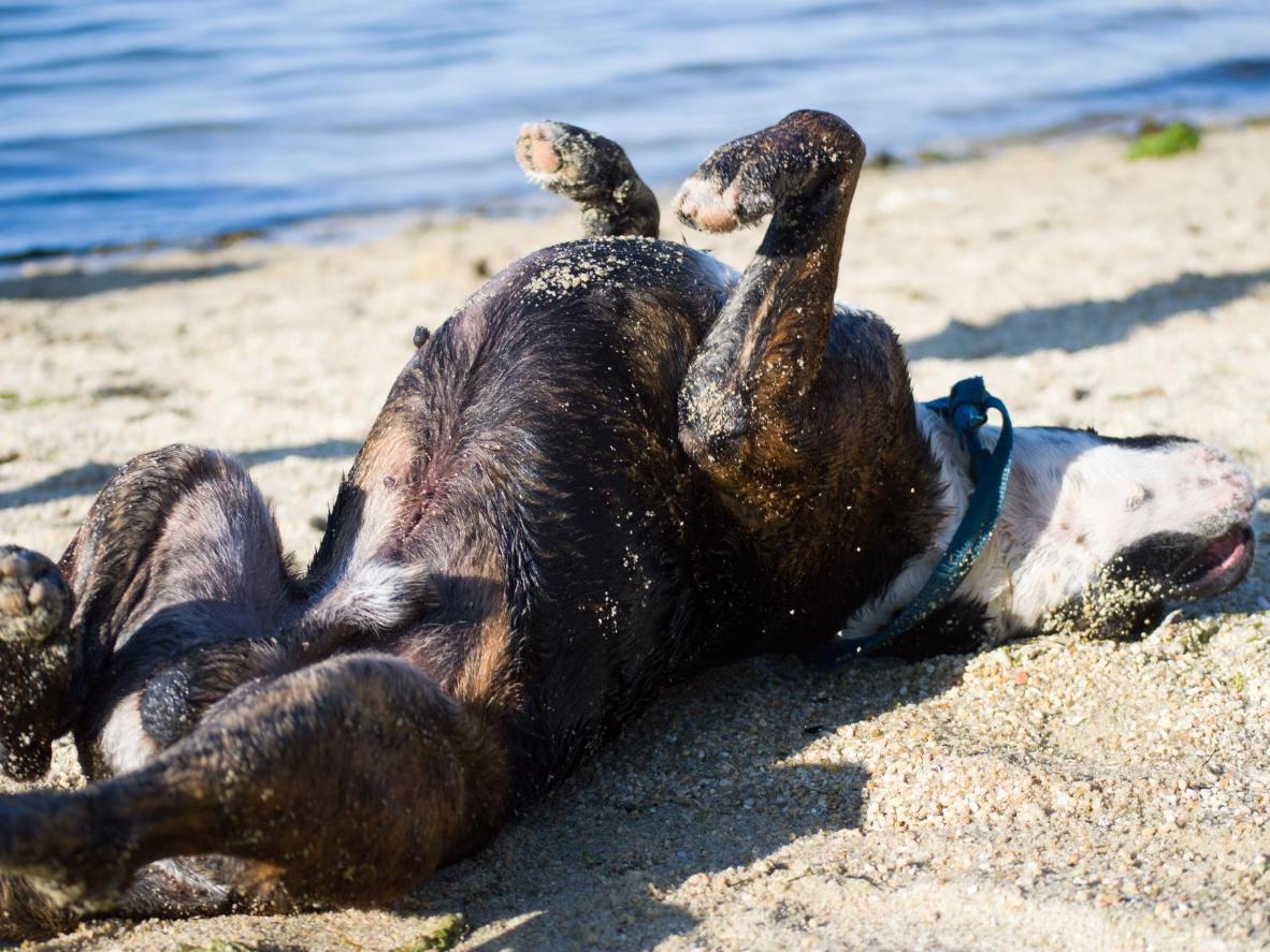 Playa del Espigón is popular amongst local dog owners