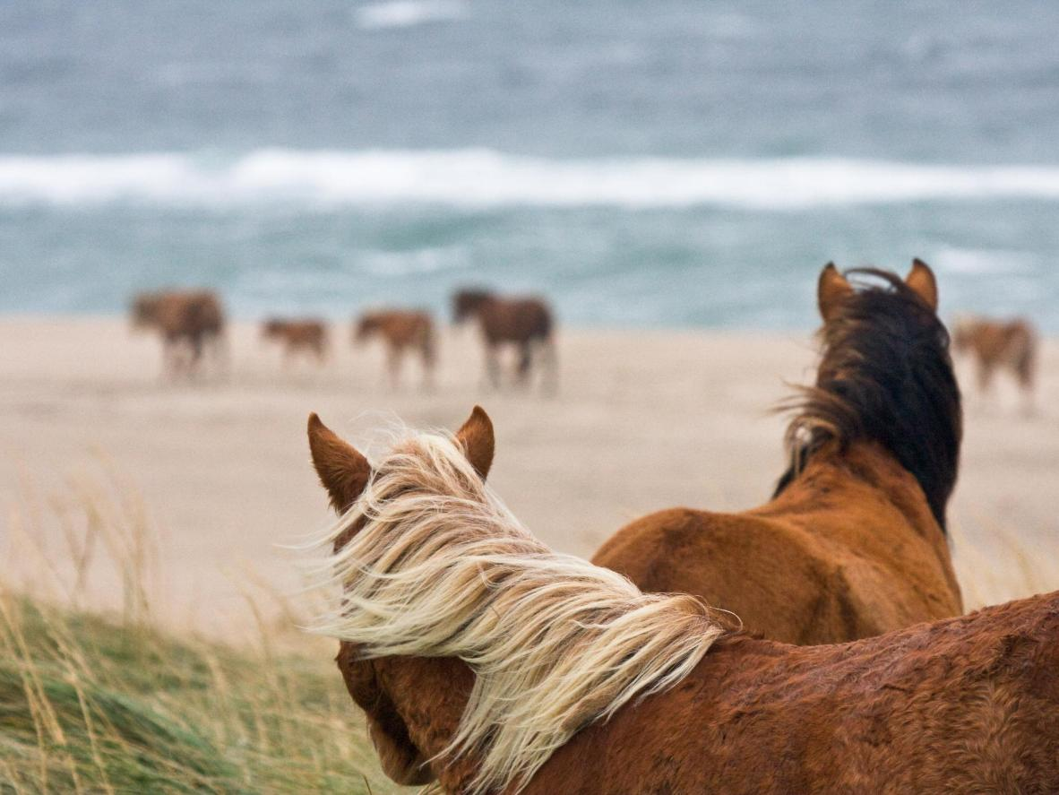 Sable Island is small but has plenty to offer all nature-lovers