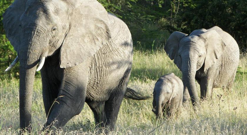 拉利贝拉野生动物保护区酒店