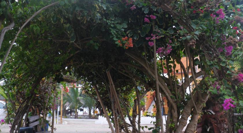 树 榕树 840_460