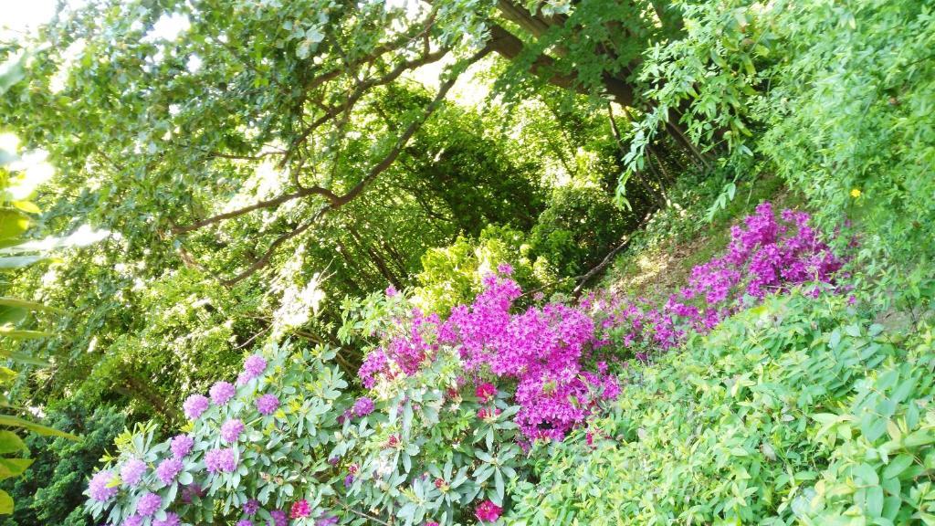 A garden outside B&B Penny's Garden