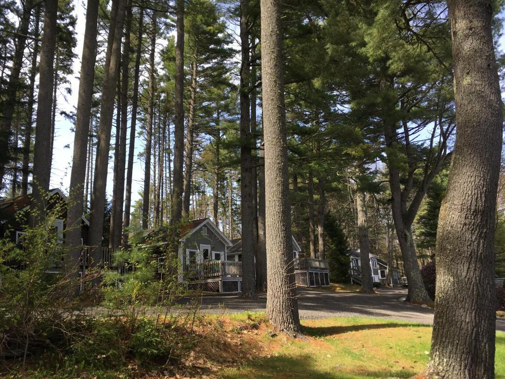 Sensational Pine Grove Cottages Lincolnville Me Booking Com Interior Design Ideas Jittwwsoteloinfo