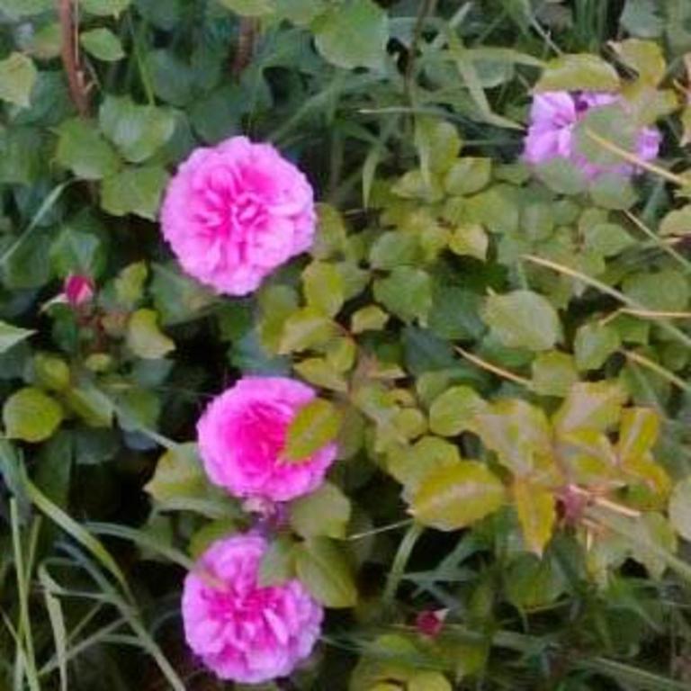Cabañas Campestres Las Rosas