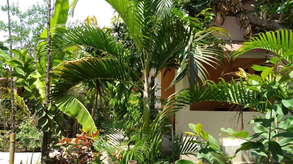 A garden outside Lagi Homestay