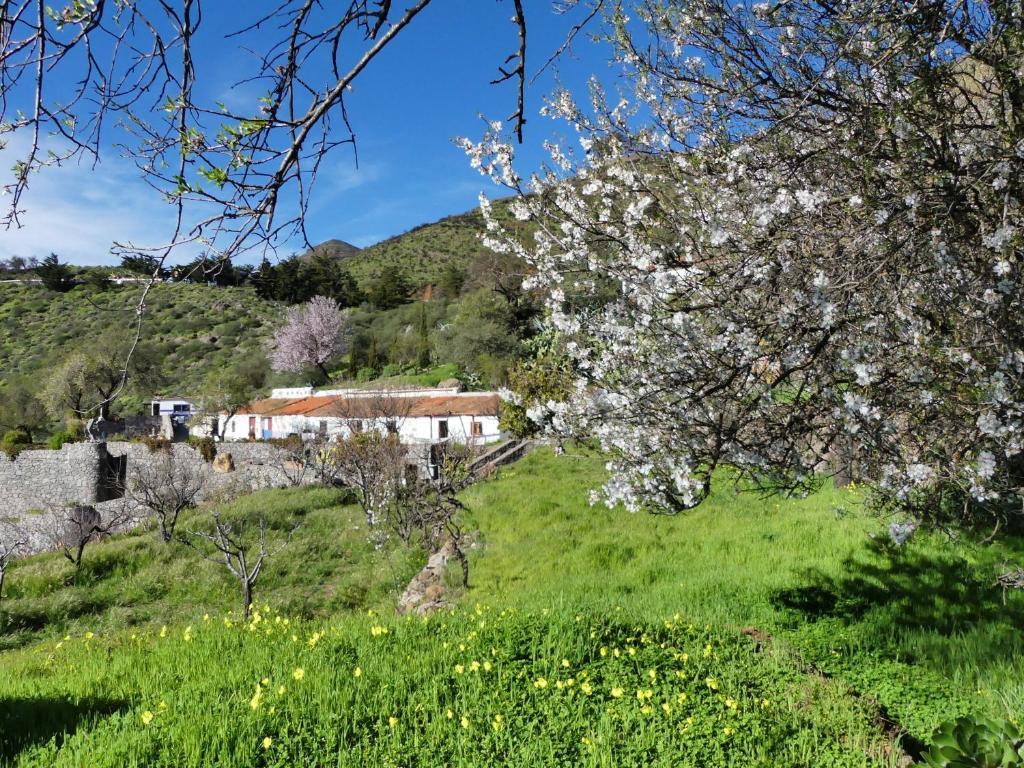 Mountain Hostel Finca La Isa Tejeda Updated 2020 Prices