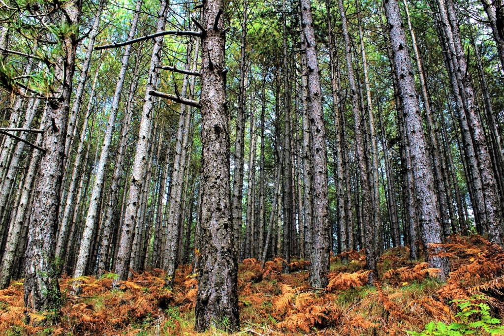 Foresta in Medias Mores
