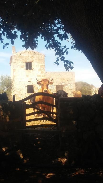 Estadía rural Sant Tomas (España Ciutadella) - Booking.com