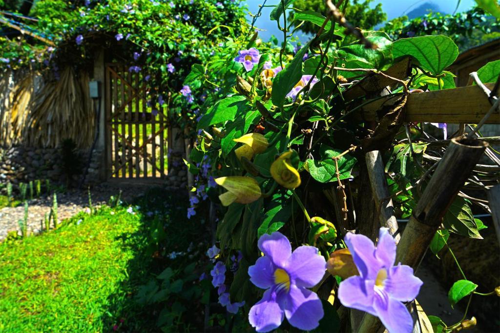 Een tuin van Casa Madera Atitlan