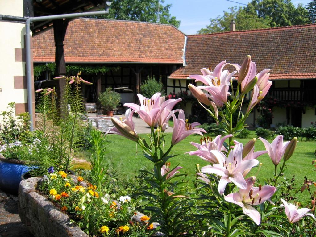Apartments In Weinbourg Alsace