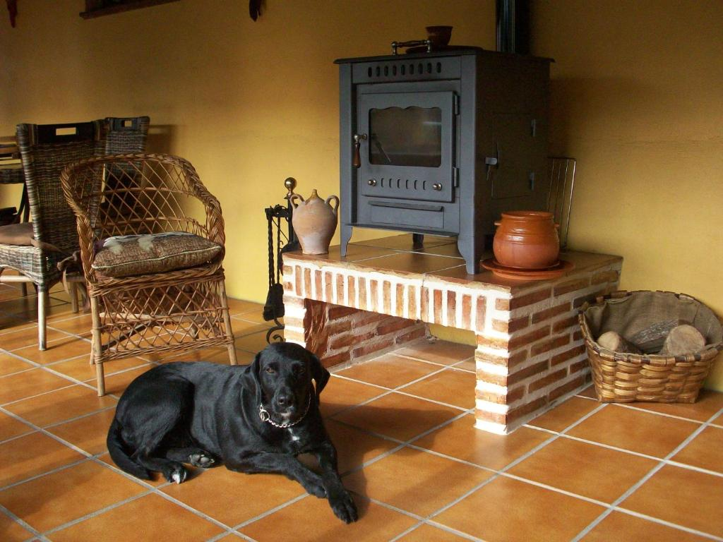 Pet or pets staying with guests at Albergue Estrella Del Camino