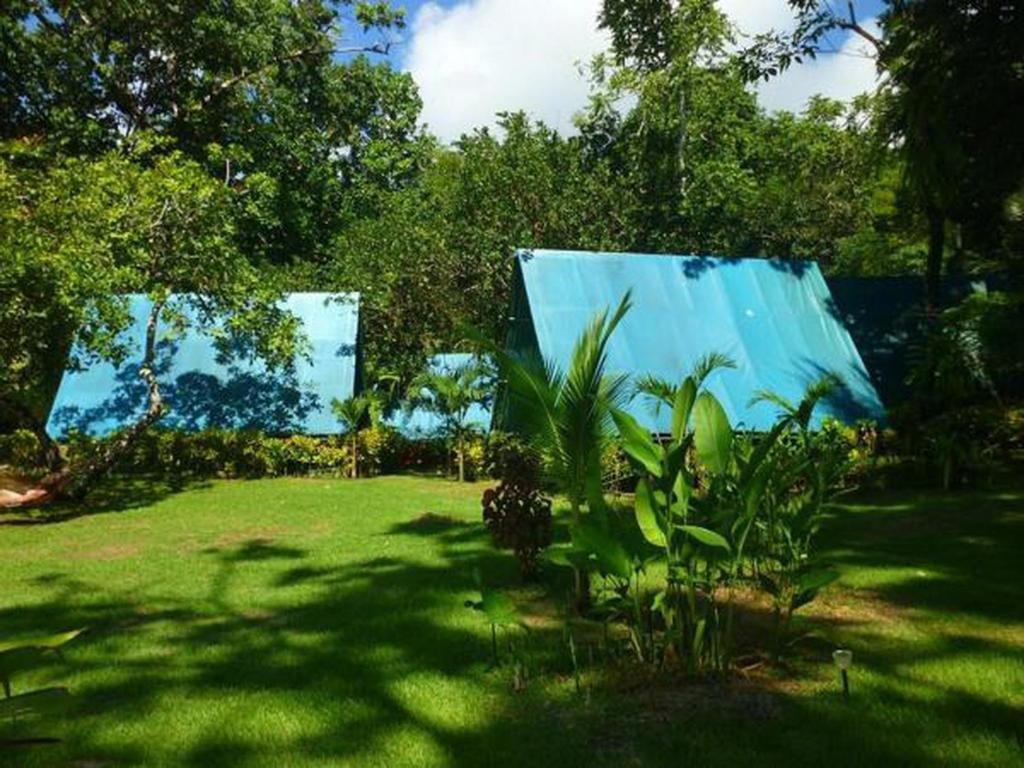 A garden outside Corcovado Adventures Tent Camp