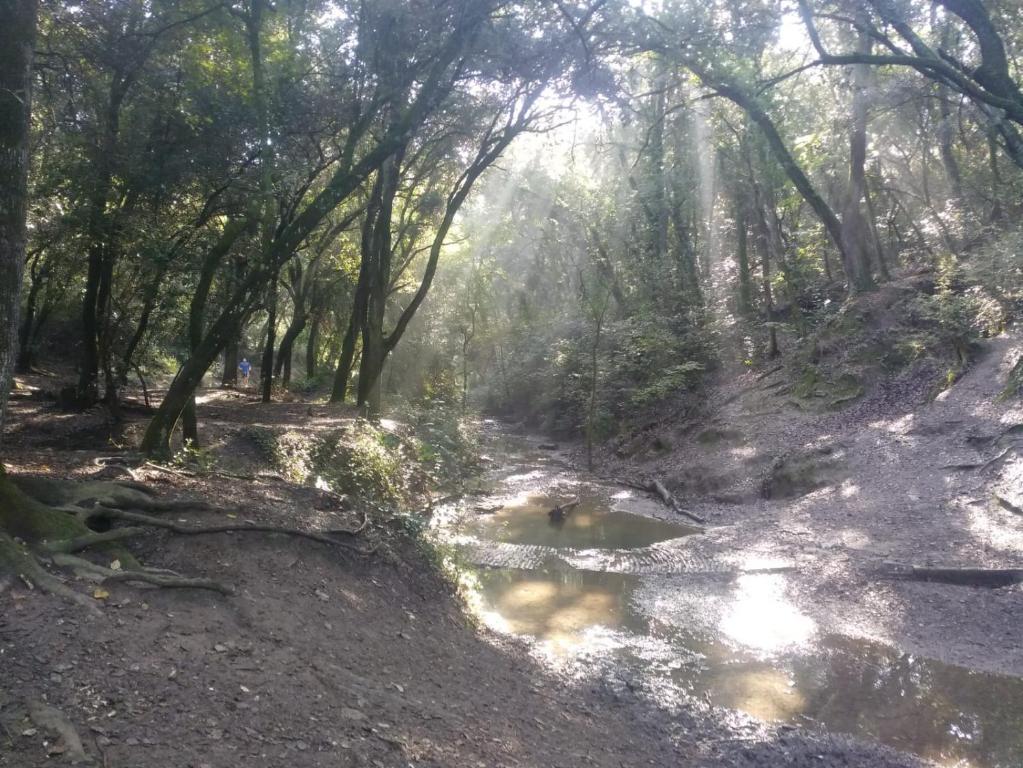 MarmotaMontflorit, Cerdanyola del Vallès – Precios ...