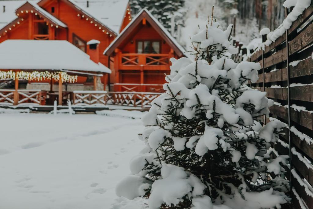 Ручьи уДачи зимой