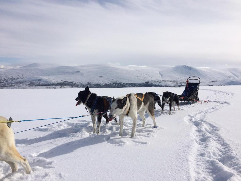 Jotunheimen Husky Lodge during the winter