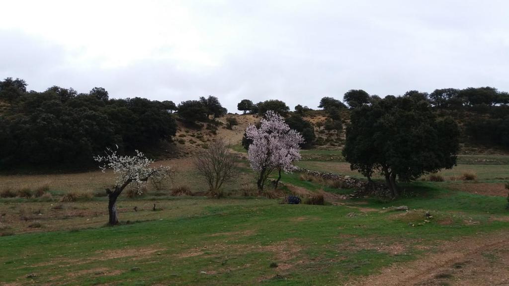 Aldea Casa Las Zorizas, Munera – Precios actualizados 2019