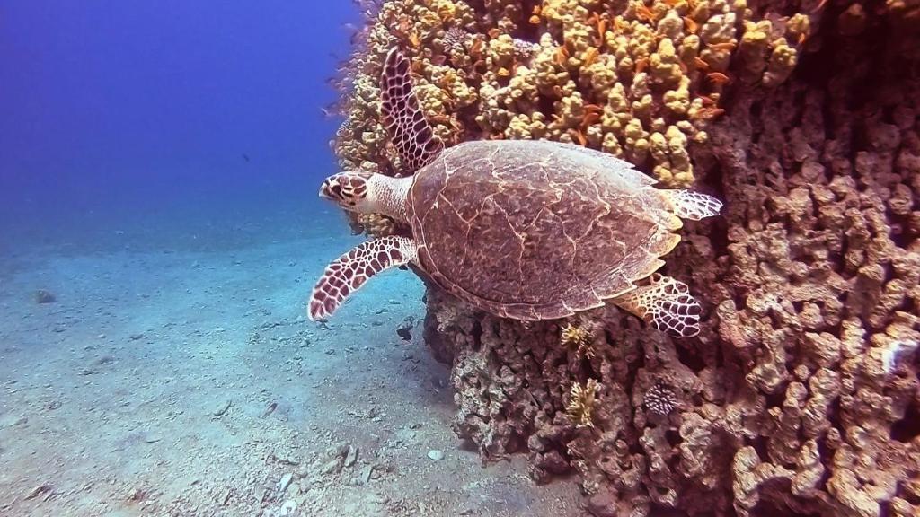 snorkel mar rojo