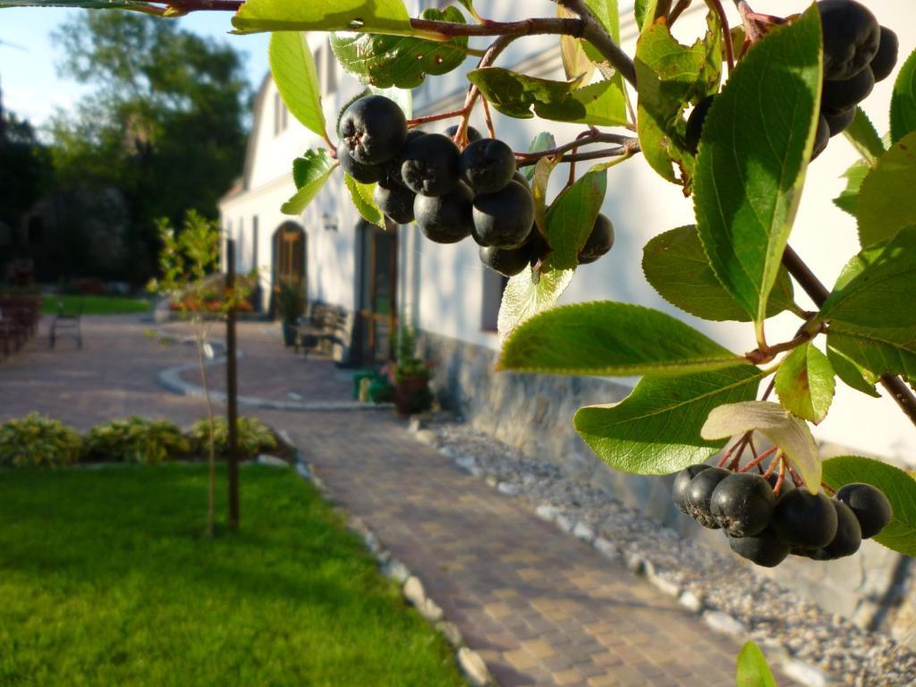 Ein Garten an der Unterkunft Aronia Park