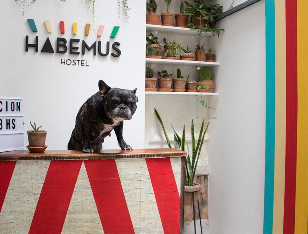 Pet or pets staying with guests at Habemus Hostel