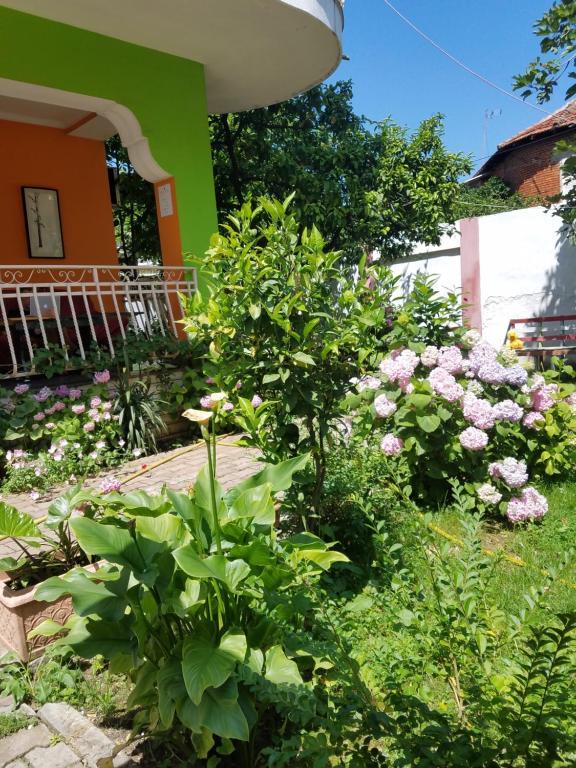 A garden outside Vertigo Hostel