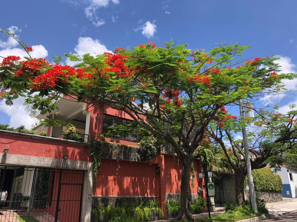هتل Hotel Arbol de Fuego
