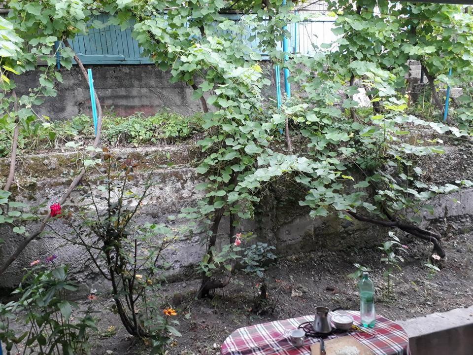Borjomi Guest House