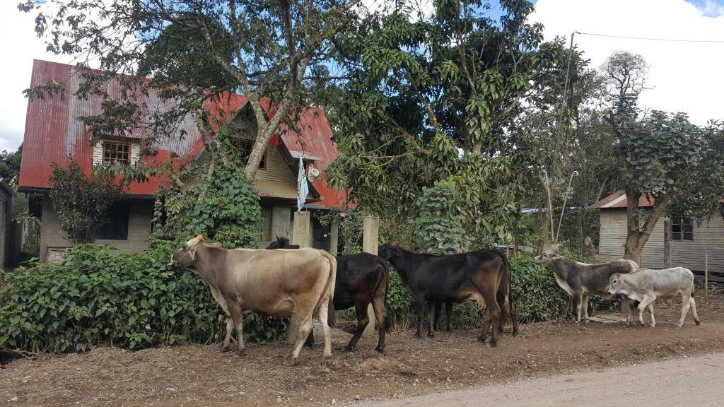 Animales en el agroturismo o alrededores