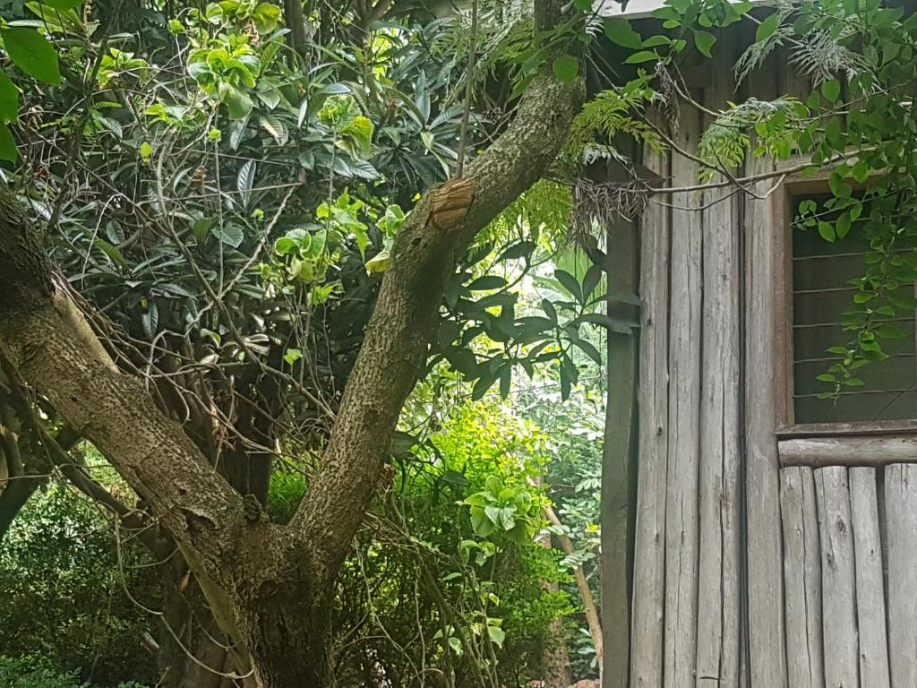 Hotel Eco Gardens Rwenzori Kitwe Uganda Booking Com