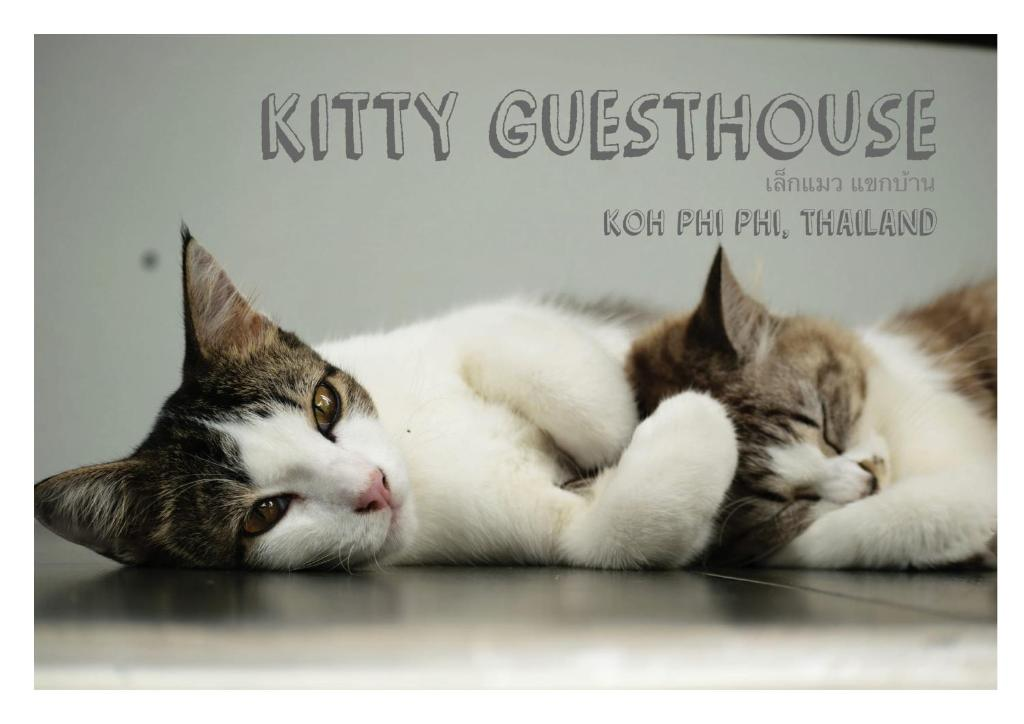 Et eller flere kæledyr der bor med gæster på Kitty Guesthouse