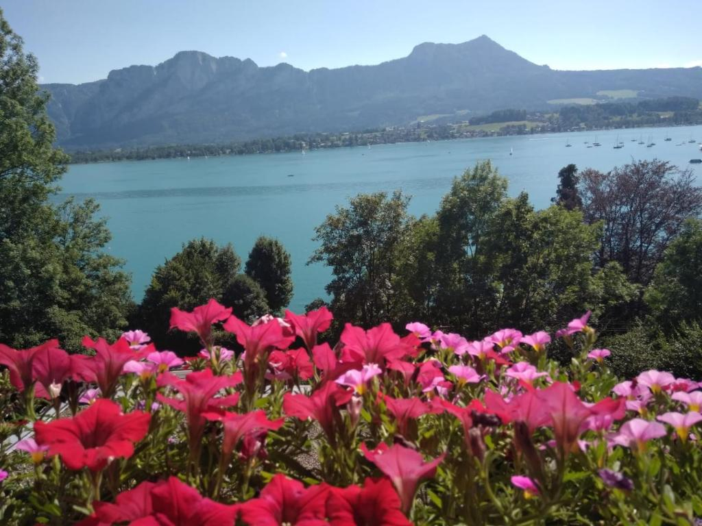 events - Mondsee am Mondsee - Salzkammergut