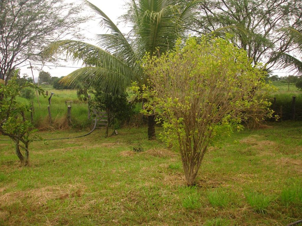 A garden outside Canto da Paz