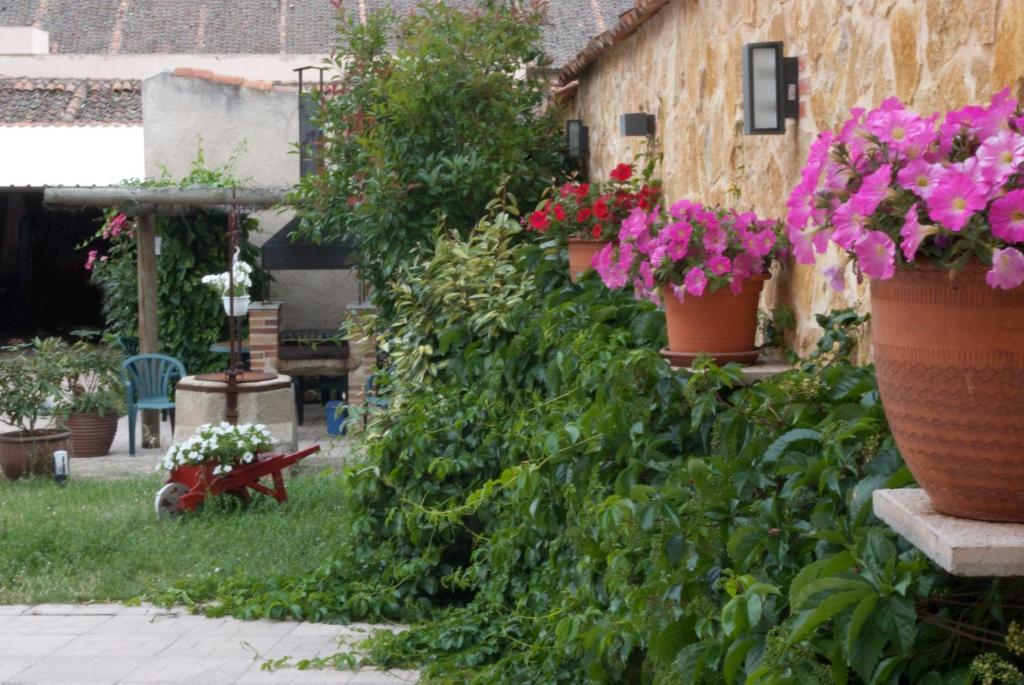Vườn quanh Villa Don Juan II