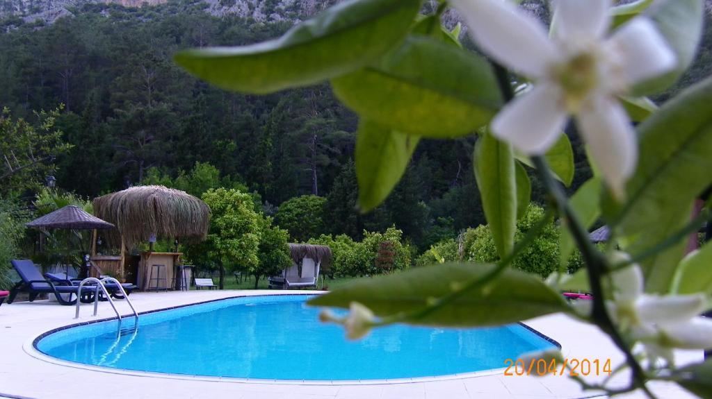 Бассейн в Portalimo Lodge Hotel - Adult Only +12 или поблизости