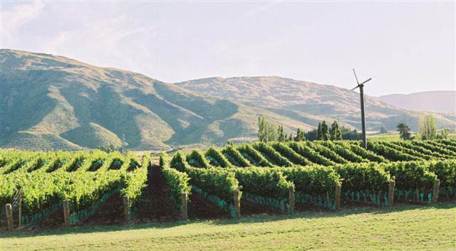 Pagan Vines Vineyard Accommodation