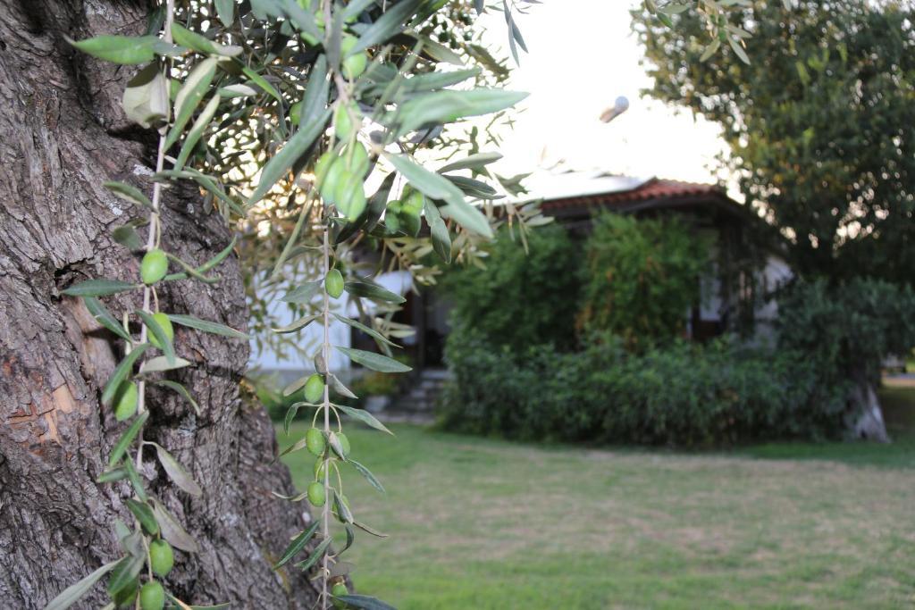 A garden outside Patroudis House