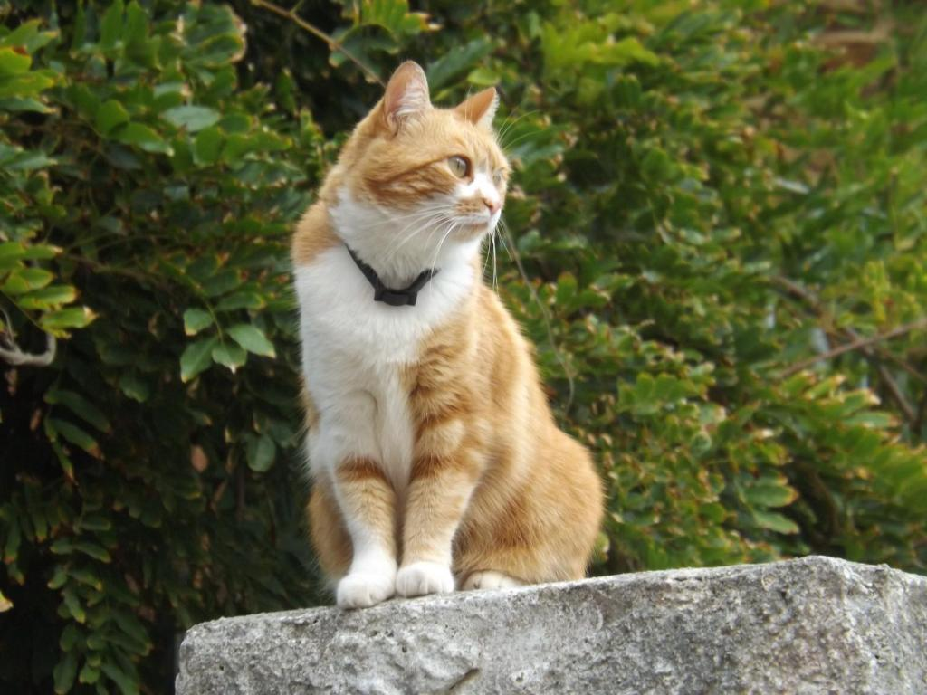 Pet or pets staying with guests at B&B Il Gatto Pescatore