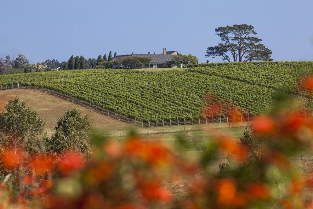 Takatu Lodge and Vineyard