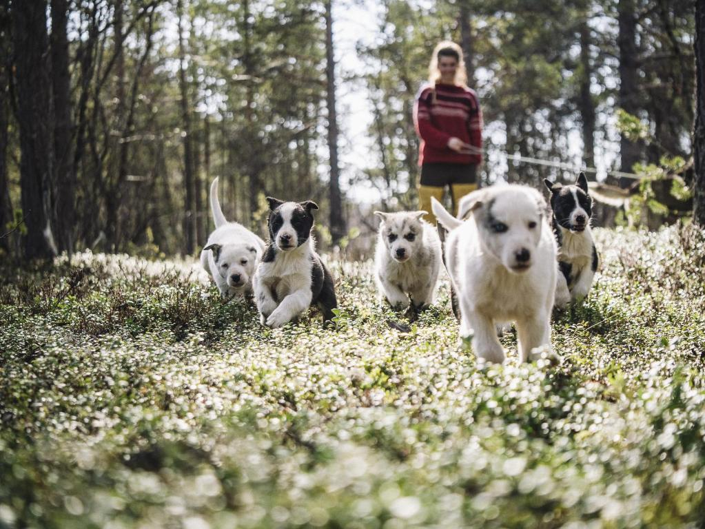 Pet or pets staying with guests at Trasti & Trine´s Lodge