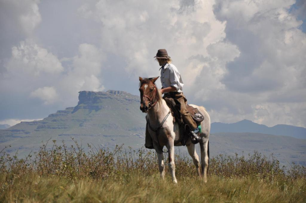 Horseback riding at the farm stay or nearby