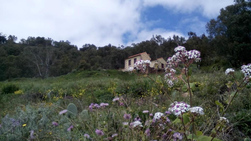 Casa Rural Las Caldereras, Teror, Spain - Booking.com