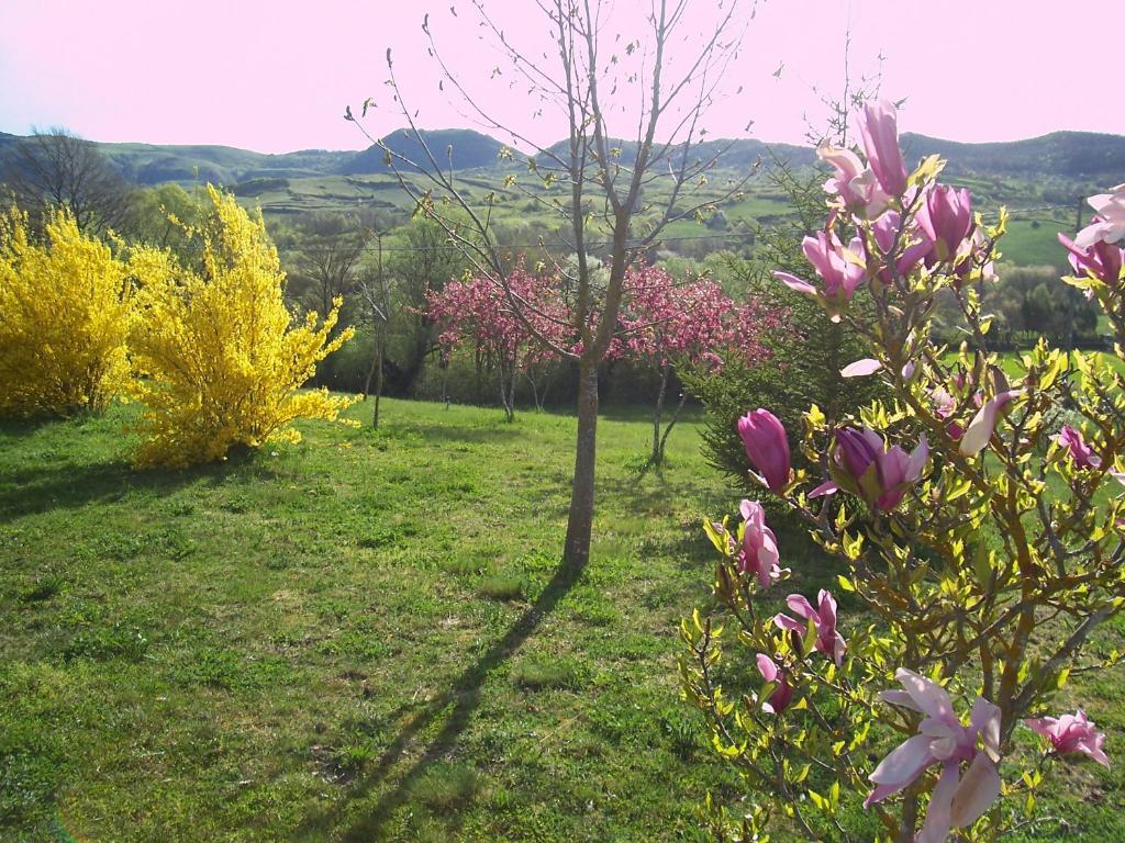 Giardino di B&B Villa Cimerone