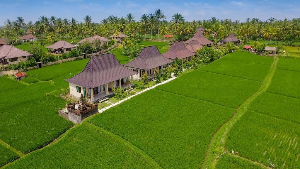 Vue panoramique sur l'établissement Masia Villa Ubud