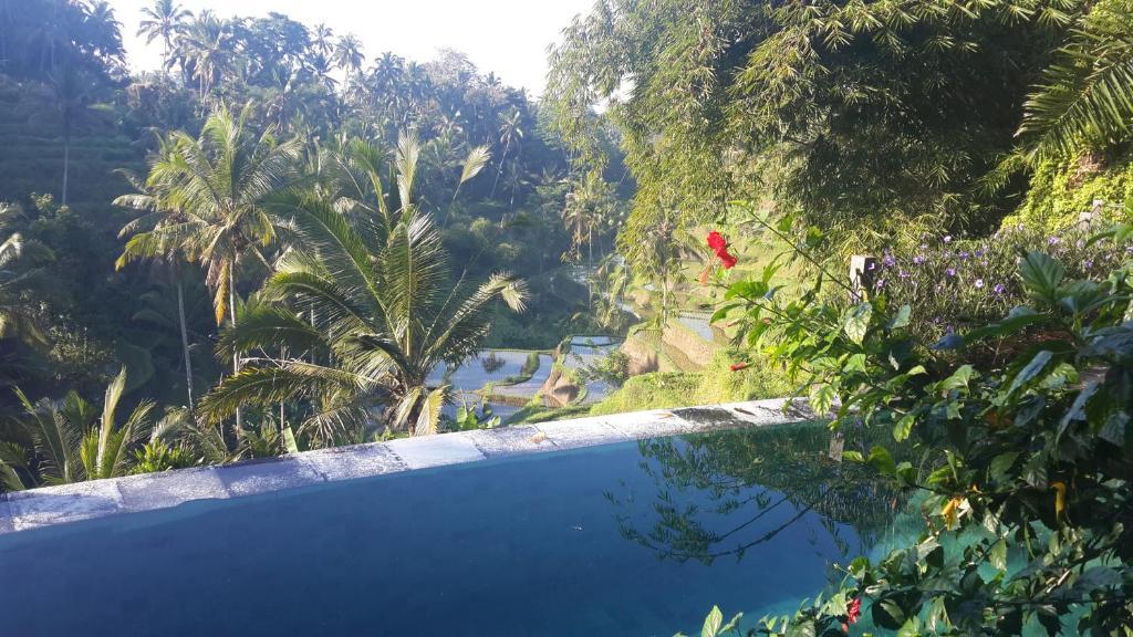 The swimming pool at or near Villa Wedang