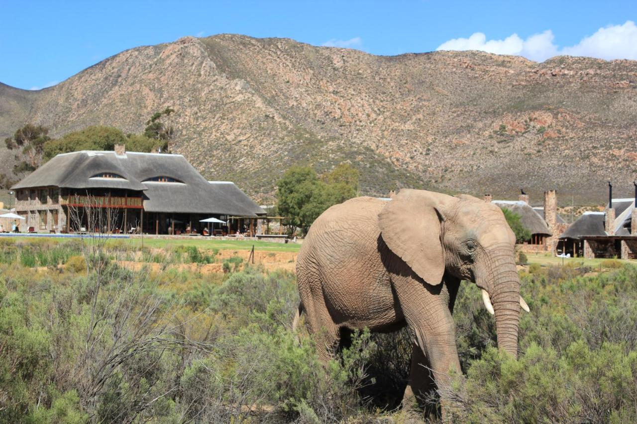 Aquila Private Game Reserve & Spa, Touwsrivier – Updated 2020 Prices