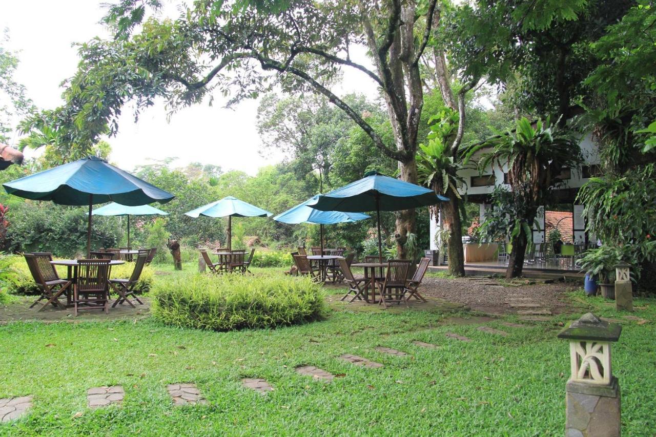 CICO Resort dengan banyak kursi dan tanaman hijau. Penginapan murah Bogor