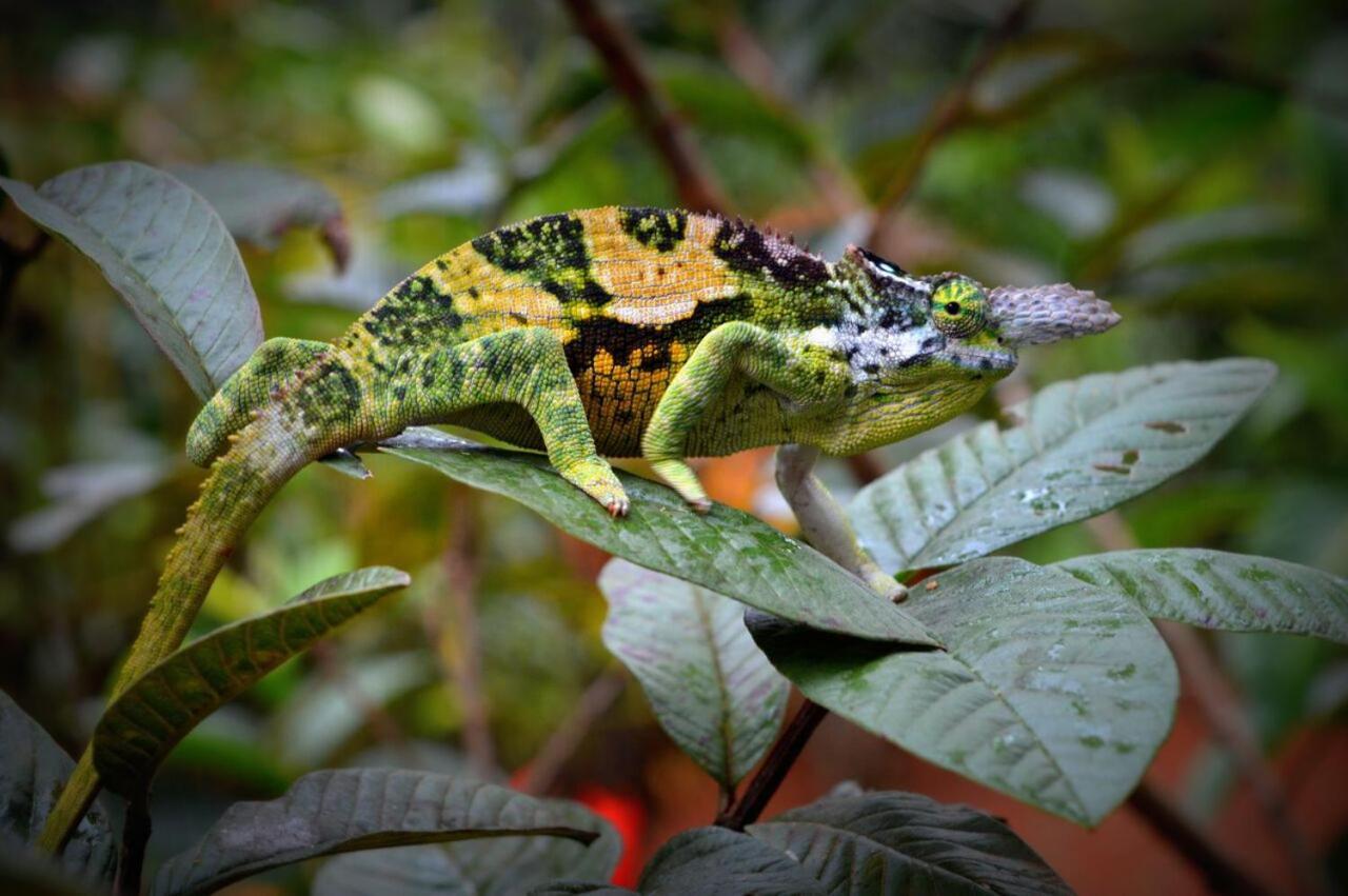 internetska upoznavanja i osobe u chameleonusavjeti za upoznavanje žena strijelca