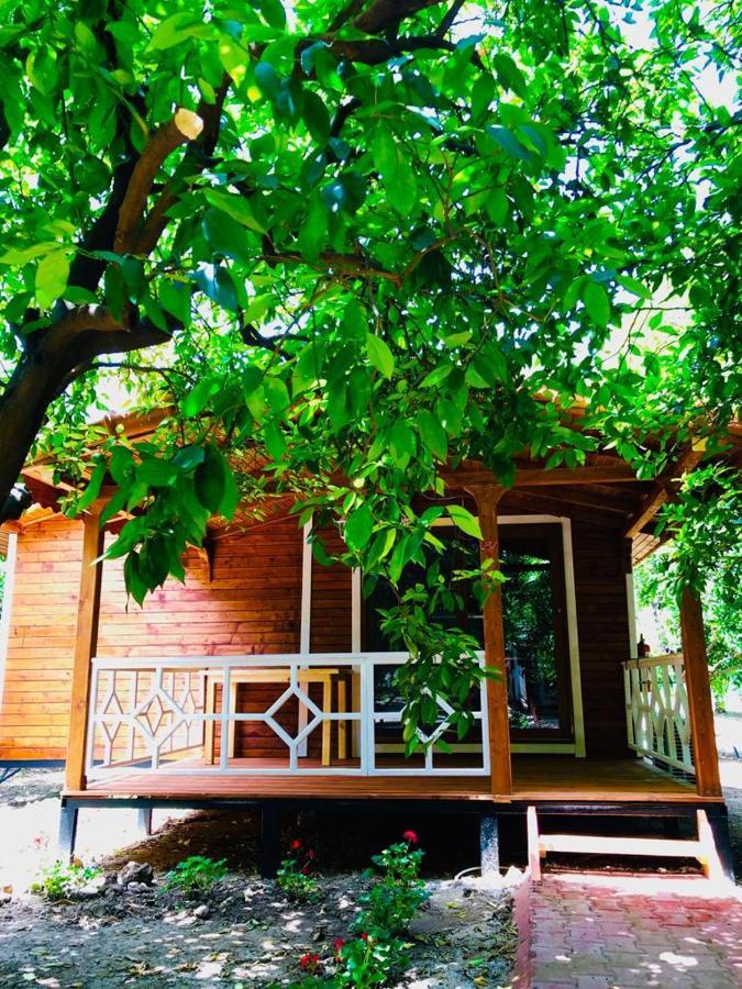 Апартаменты  Eliz Inn Garden