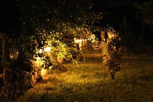 A garden outside Villa Patrice
